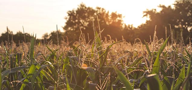 farm-field635