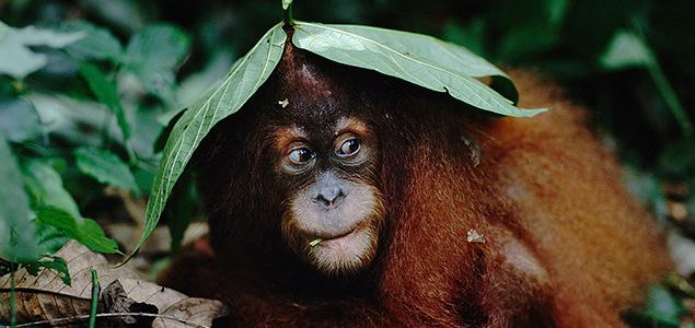 monkey635