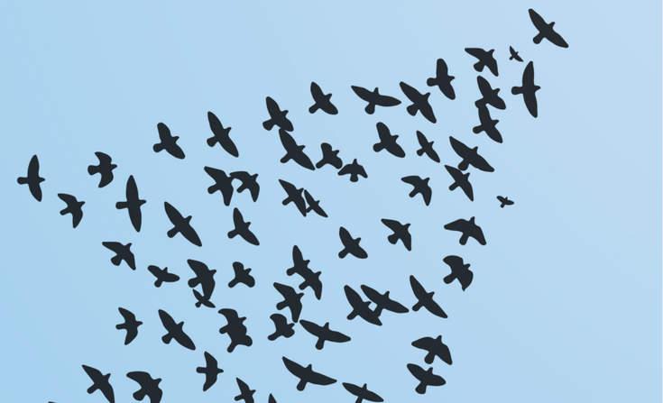 birds_merttoker_sstock