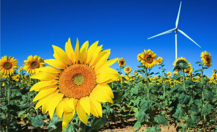 sunflower_angellodeco_sstock