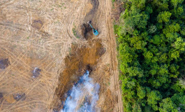 deforestationshutterstockbyrichardwhitcombe