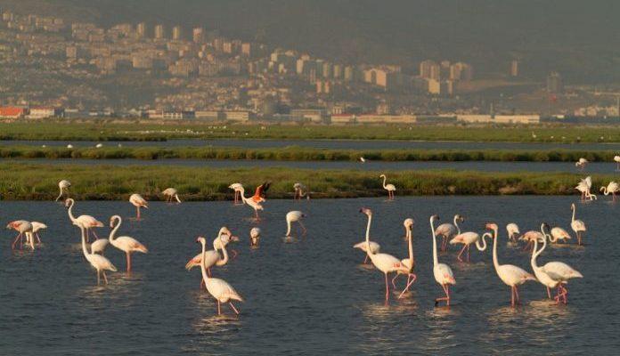 flamingo-gediz-deltası-696x408-1-696x400